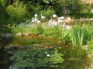 c Vogelpark Herborn Biotopteich 300x225 Priska Hinz   Naturparkbotschafterin