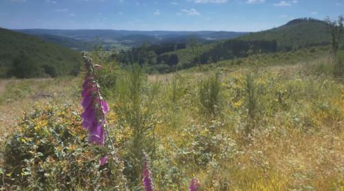 c elenovela Naturpark LDB 2 Neu: Der Naturpark Film