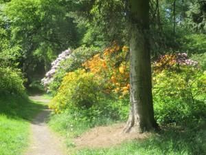 10 Bot. Garten c Sibylle Susat 2 300x225 5. Mai 2019: Rundgang durch den Forstbotanischen Garten