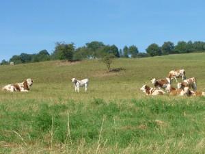 Landwirtschaft (c) Sibylle Susat