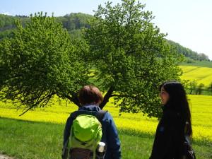 13_Bienenwanderung_im_Naturpark_M__nde_c__Sibylle_Susat