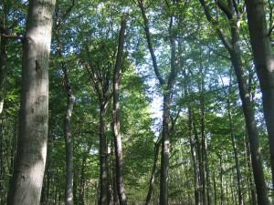 Wald im Wandel der Zeiten