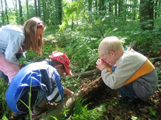 18 Becherlupe Totholz I 620x465 26. Juli 2013 Wald mit allen Sinnen erleben