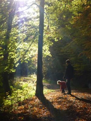 Waldgeschichte (c) Sibylle Susat