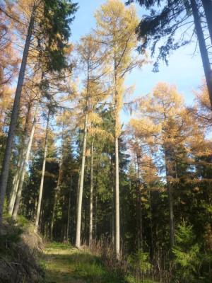 Exoten und heimische Bäume entdecken