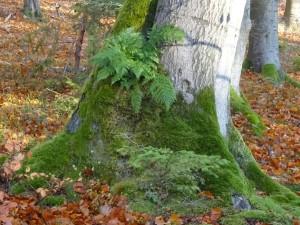 Baum-im-Naturpark-Münden-Wald-mit-allen-Sinnen-c-Sibylle-Susat.jpg