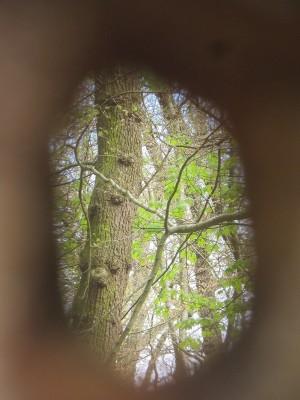Einblicke in den Maiwald! (Sibylle Susat)