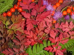 Farben (c) Sibylle Susat
