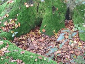 Der Wald - eine Bühne für Geschichten, Märchen und Mythen (c) Sibylle Susat