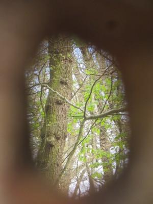 29_Arboretum_Habichtsborn_im_Naturpark_M__nden__c__Sibylle_Susat