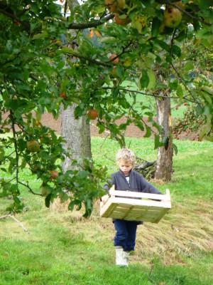 Apfelernte Streuobstfest im Naturpark Münden (c) Sibylle Susat