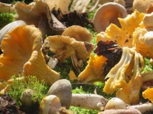 Pilzvielfalt im Naturpark Münden (c) Sibylle Susat