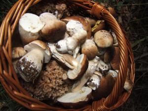 Pilze (c) Sibylle Susat