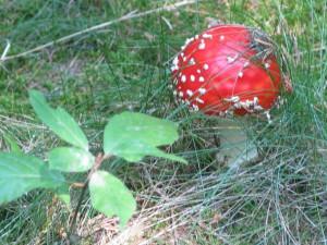 Lamellenpilze im Naturpark Münden (c) Sibylle Susat