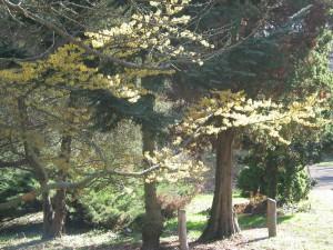 Botanischer Garten (c) Sibylle Susat