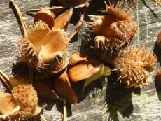 Basteln Natur im Herbst (c) Sibylle Susat
