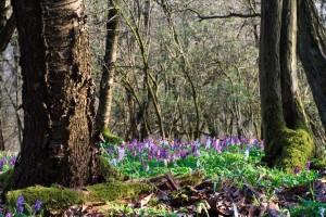 Frühling im Forstbotanischen Garten  im Naturpark Münden (c) R. König