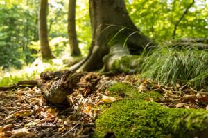 Naturpark_Münden_c__Peter_Heitmann