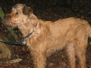Hund (c) Sibylle Susat