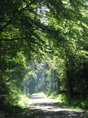 Forstbotanischer Garten im Naturpark Münden (c) Sibylle Susat