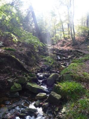 Kühler Sommerbach im Naturpark Münden (c) Sibylle Susat