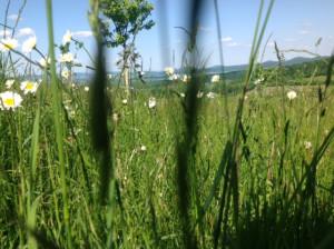 Blick aus Sommerwiesen (c) U.v. Zaborowski