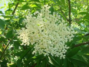 Sommerlicher Blütengenuß