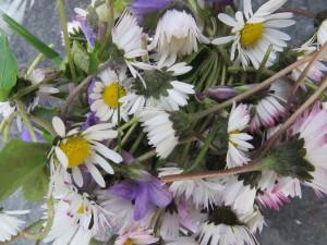 Gänseblümchen im Salat (c) Sibylle Susat