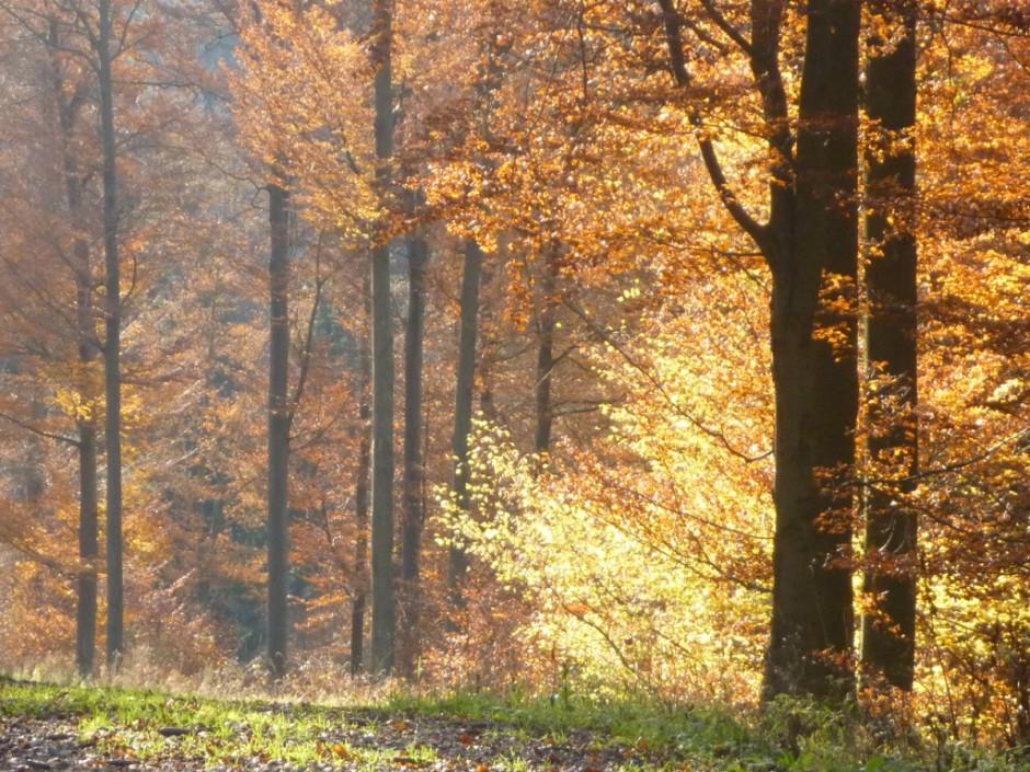Herbstwanderungen im Naturpark Münden 940x705 Herbstlich leckere Kürbissuppe