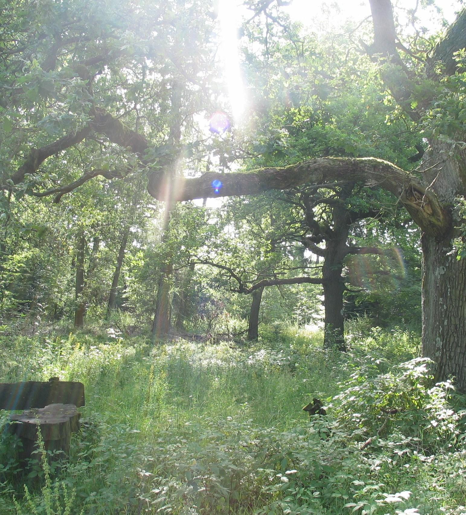 Hutewald im Naturpark Münden h c Sibylle Susat Foto des Monats