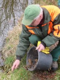 Kroetenwanderung 200x267 Krötenwanderung – Mitarbeiter des Naturparks Münden und freiwillige Helfer waren im Einsatz