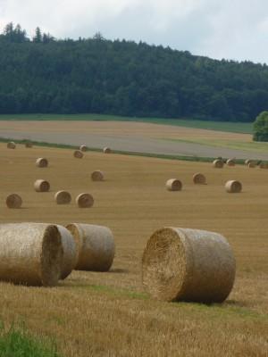 Landwirtschft im Naturpark (c) Sibylle Susat