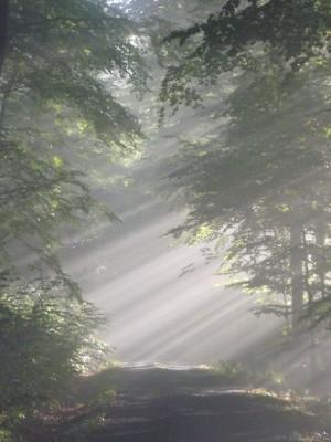 Nebelwanderung  (c) Sibylle Susat