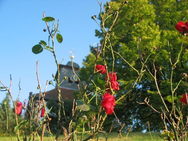 Rosen und Kirchturm I Frühherbst