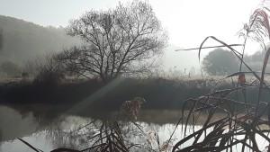 Winter an Werra (Sibylle Susat)