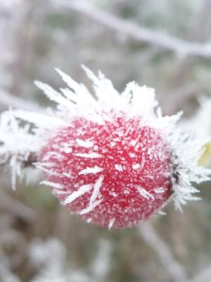 Winterperspektiven (c) Sibylle Susat