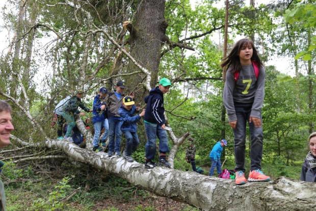 Baumlaufen 620x414 Umwelttag 2015 im Naturpark