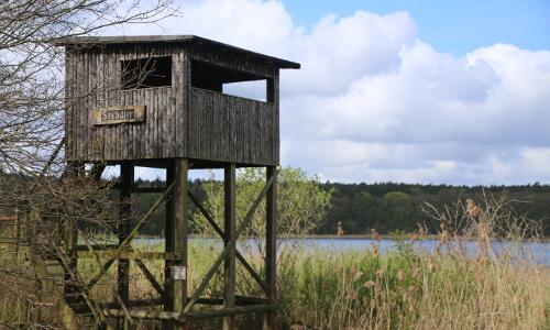 Beobachtungsturm Seeadlerb Frühling im Naturschutzgebiet Krakower Obersee