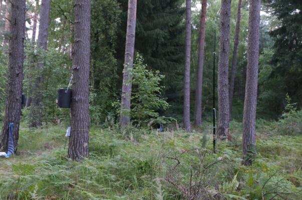 Flaus1 Fledermaus Workcamp in der Naturschutzstation