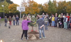 Pflanzung einer Flatterulme auf dem Schulhof der Klüschenbergschule Plau am See