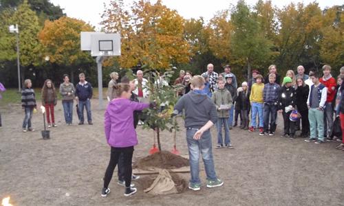 Junger Riese Schule Plau Nossentiner Schwinzer Heide 2013 Mein Freund, der Baum
