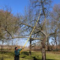 Karow Obstbaumschnitt