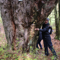 Kiefer bei Klleesten_Naturdenkmal_bf