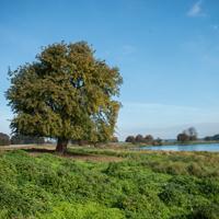 Krakower Obersee-4564 Beitrag