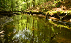 Mildenitztal - Copyright: Naturpark Nossentiner/Schwinzer Heide
