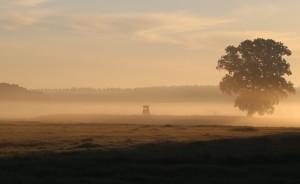 Nebel IMG_6529_klein