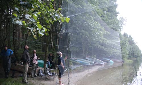 "Netzfang Fledermausworkcamp in der Naturschutzstation ""Gerhard Cornelssen Haus"""