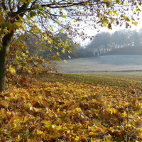 Naturpark Nossentiner Schwinzer Heide