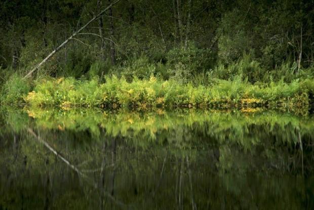 """Spiegelung im Moor FotoMonikaLawrenz 3192 620x414 Foto Workshop """"AUGUSTLICHT"""" mit Monika Lawrenz im Naturpark am 19. August 2017"""