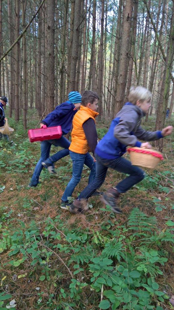 WP 20171019 10 42 11 Pro Pilze im Naturpark suchen lernen